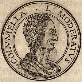 Статуя Колумеллы