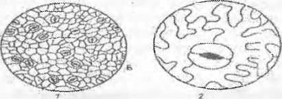 image16